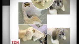 Російські собаки безкоштовно можуть на все життя обзавестися георгієвським тату