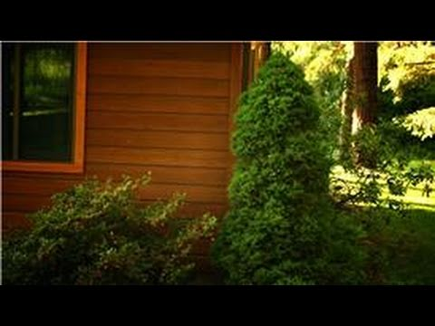 trees & landscaping prune