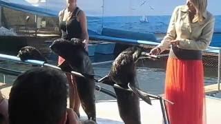 Морские котики читают рэп смотреть до конца смешно