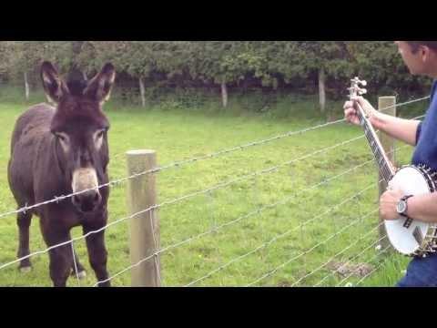 Kicking Mule