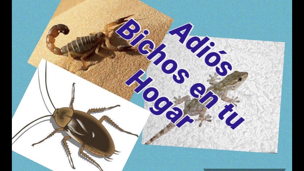Cómo eliminar cucarachas, hormigas, lagartijas, grillos, alacranes de tu hogar / Elimina cucarachas