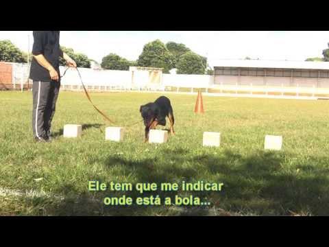 Adestramento Rottweiler Mike  2° Mês