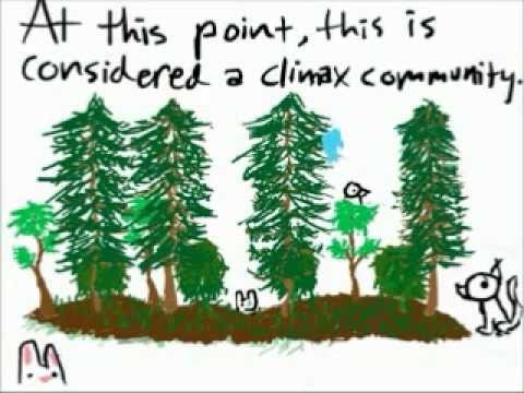 Ecological Succession Animation
