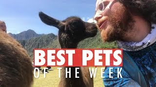 Best Pets of The Week | January 2018 Week 2