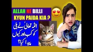Allah Talah Ny Billi (Cat) Ko Kasay Aur Kab Paida Kiya? Pets in Islam | Pets allowed in Islam