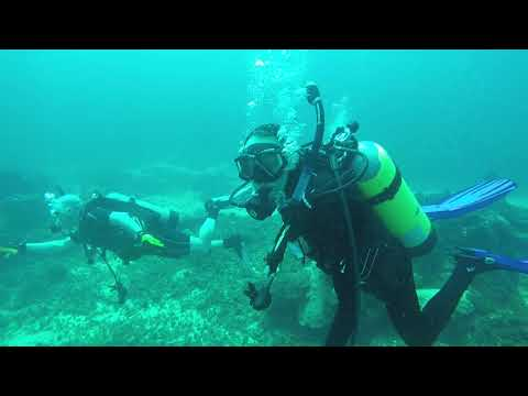 Yardie Divers Jamaica || Port Royal Dive Sites
