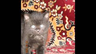 Памяти кота Антоши.wmv