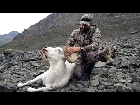 "S9:E3 ""SURPRISE RAM"" Dall Sheep Hunt in Alaska"