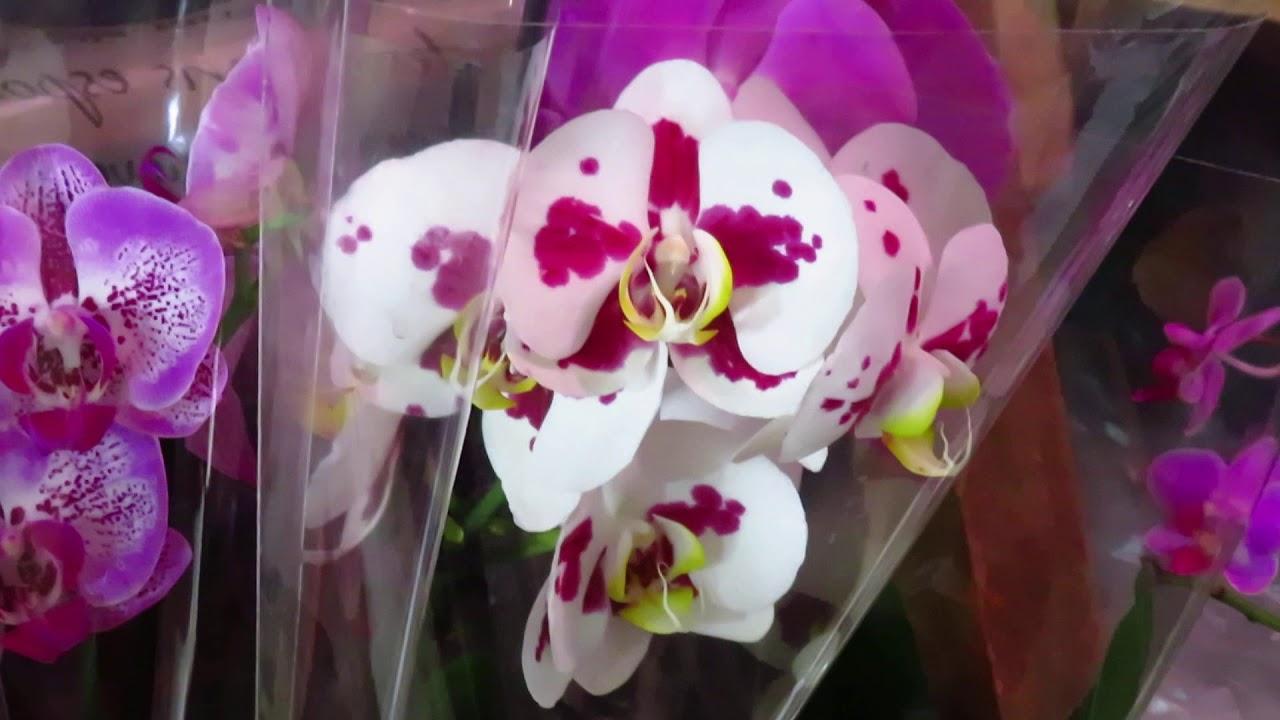 Новый завоз орхидей от 30.06.2020г.Шикарная Ванда!!!!!
