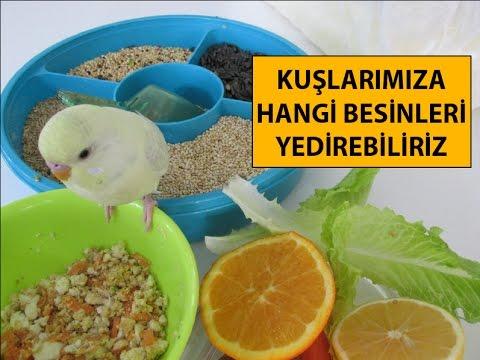 Kuşlarımıza Hangi Besinleri Yedirebiliriz