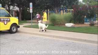 Tulsa Dog Training - White German Shepherd