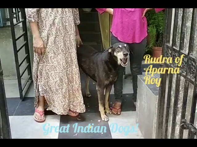 Great Indian Dogs