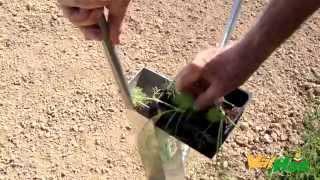 Trapiantatrice manuale per ortaggi il trapiantatore for Piantapali manuale