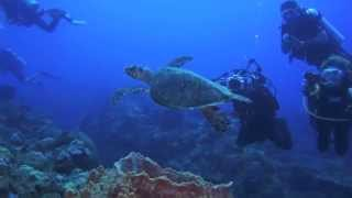 Scuba Diving Saba and St. Kitts with Caribbean Explorer II