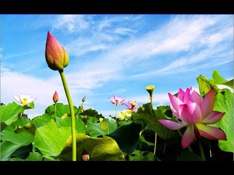 Nhạc Thiền Phật Giáo - Giúp Ta Tĩnh Tâm, Thư Thái, Thanh Thản, An Nhiên - Nhạc Không Lời Hay Nhất