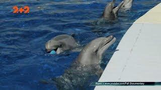 Дельфіни: акушери, коханці, убивці чи прибульці?