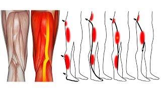 8 Упражнений от Боли в Ногах и Коленях