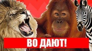 приколы 2019 🔔👍обезьяны зоопарка Дрездена
