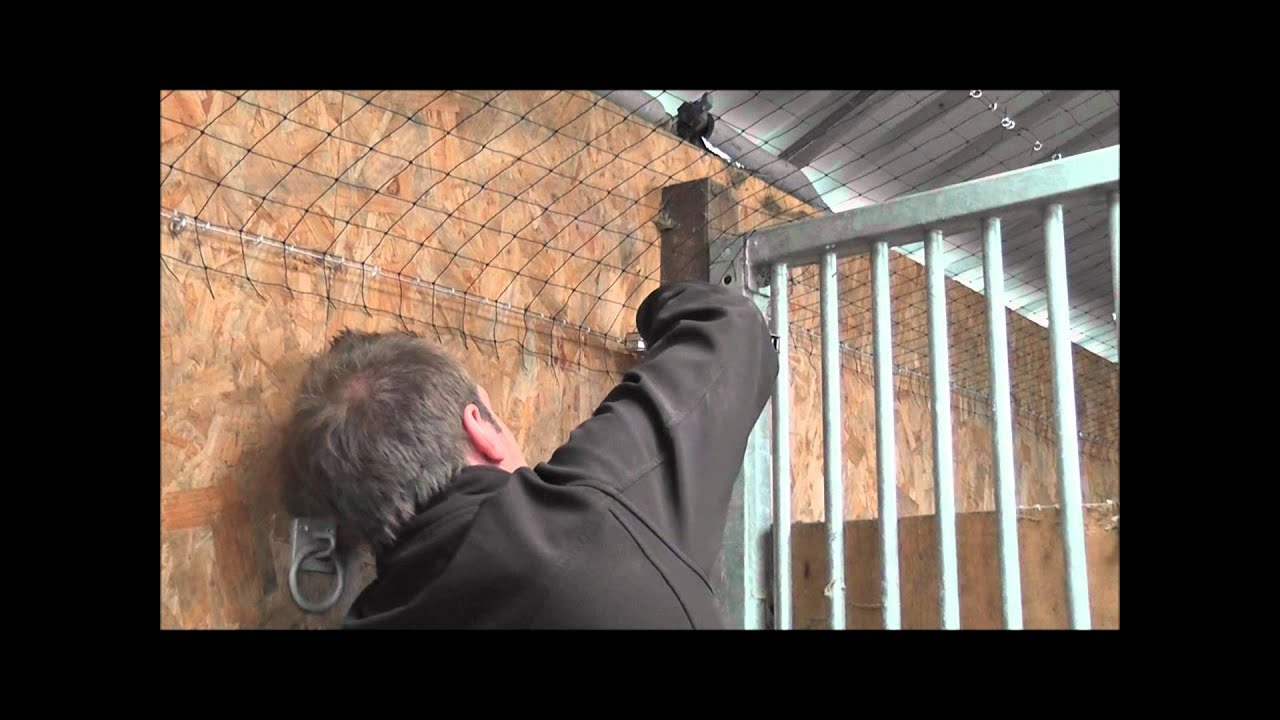 How To Get Rid Of Pigeons   Bird Proofing Solutions   NBC Bird U0026 Pest    YouTube
