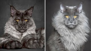 10 Most Unusual Cat Breeds in the World
