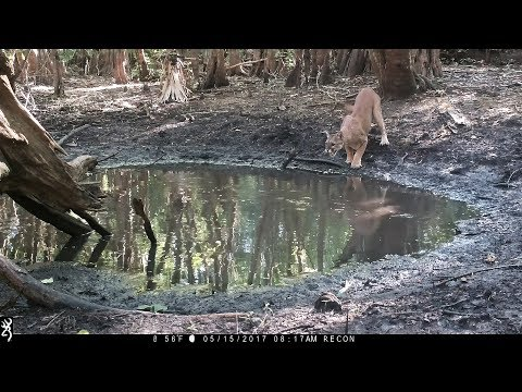 Waterhole Trail Camera Pickup