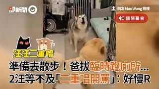 飼主遛狗前先上廁所!哈士奇+鬆獅犬等不及「二重唱開罵」|狗|寵物|二哈|搞笑