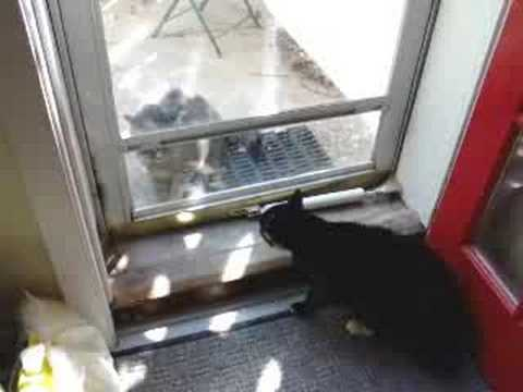how to stop a cat from climbing on screen door