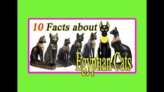 10 Facts About Egyptian Cats