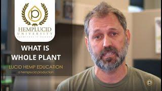 What is Full Spectrum CBD Oil or Whole Plant CBD Oil?