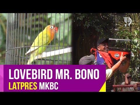 Lovebird Bebas Mr. Bono Koncer dalam event Latpres MKBC