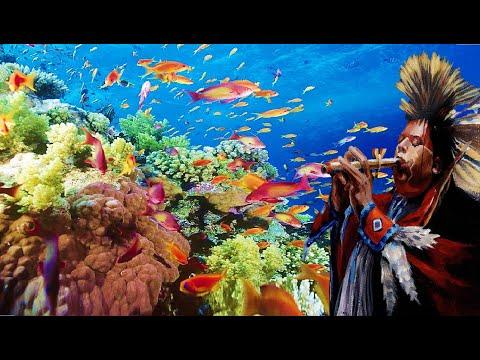 Peixes Exóticos e Coloridos em uma… Viagem ao Fundo do Mar