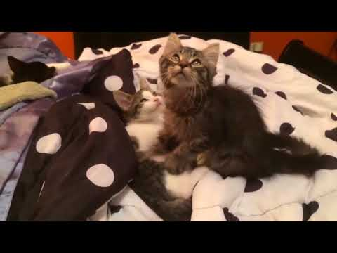 Cats Don't Care Funny Pets Videos | Best Funny Cat Videos Ever ...