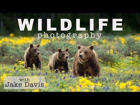 Wildlife Photography Interview with Jake Davis