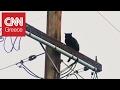 Η γατούλα που παγιδεύτηκε για μία εβδομάδα πάνω σε κολώνα ηλεκτρισμού