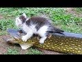 You just CAN'T FIND FUNNIER ANIMAL VIDEOS THAN THIS! - Best FUNNY ANIMAL compilation