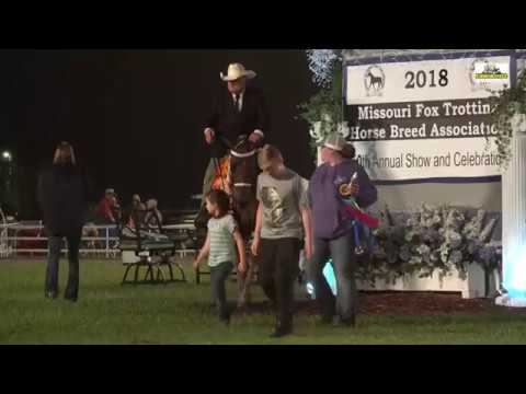Ava 2018 WGC Open 3 Years  Performance Missouri Fox Trotter  8th.