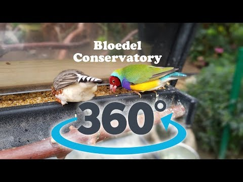 Bloedel Conservatory Vancouver 360 Video of Beautiful Birds and Tropical Plants - April 2018