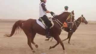 Me and Magic Glenn Womack 120 km CEI** in Dubai