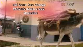 Ndi burro kao chinga Antonio isidro el mazateco
