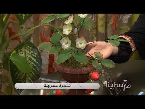 شجرة الفراولة / قسطبينة - ركن تشكيل الأزهار و الفواكه على الطريقة الصينية / فتوى أوكيد/ Samira TV