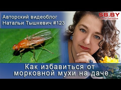 Как избавиться от морковной мухи на даче