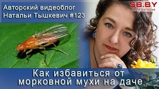 видео Способ борьбы с мухами (средство