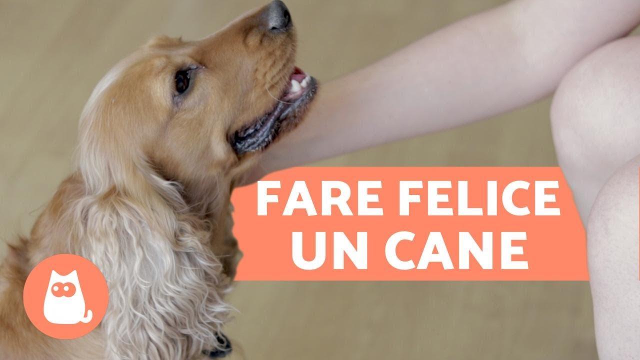 Come calmare un cane spaventato? - ADVANCE