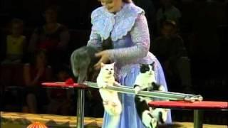 Цирк кошки.VOB