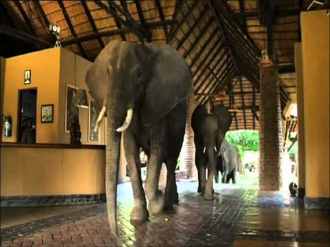 The Elephants that came to Lunch (Two)