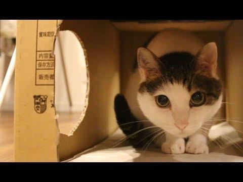 猫とうさぎとダンボール遊び♪ - Cardboard play with cats and rabbits