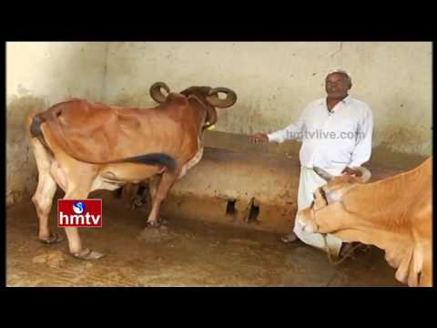Success Story of Dairy Farming: Information Guide By Inspirational Farmer | Nela Talli | HMTV