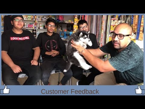 Customer Feedback - Bhola Shola films
