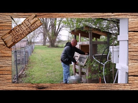 How Much Work Are Quail: The SR Quail Update 4-3-17