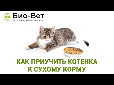 Как заставить кошку есть сухой корм